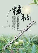 《核桃实用技术图解》李建红,杨全生【pdf】插图